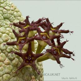 Pseudolithos-migiurtianus